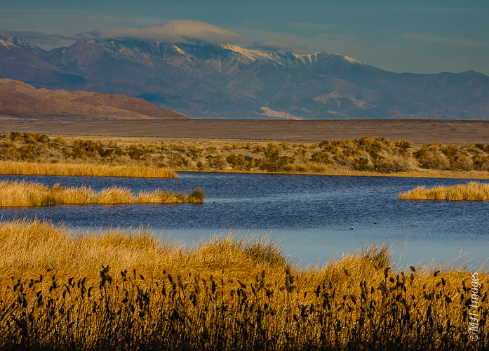 Snow-capped Panamint Range from southern Death Valley's Saratoga Springs.