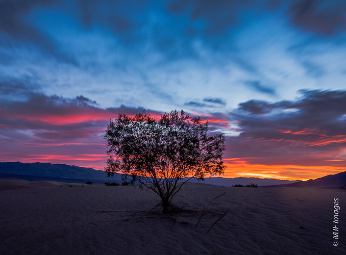 A mesquite grows in the sands of Death Valley in California.