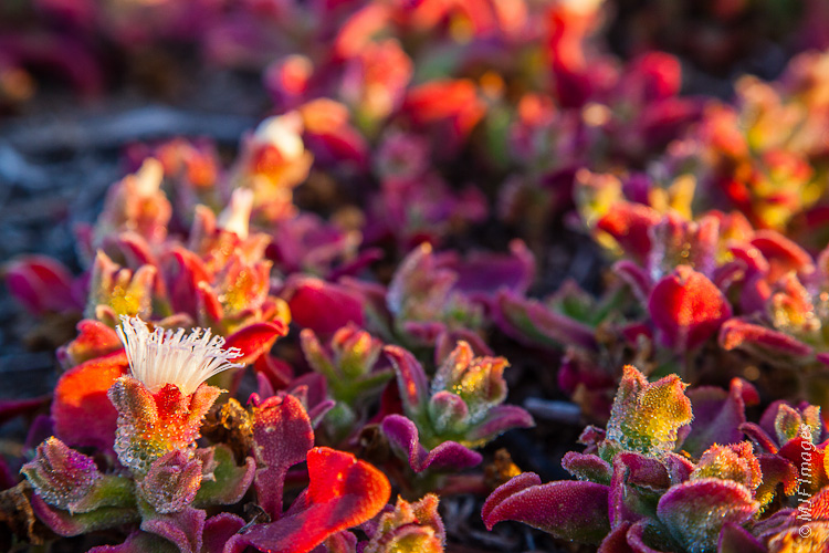 The desert floor in Baja California Norte takes on festive colors in December.