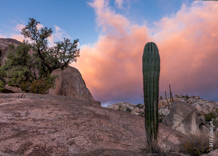 Cactus and granite are features of the landscape of the northern Baja Peninsula interior.