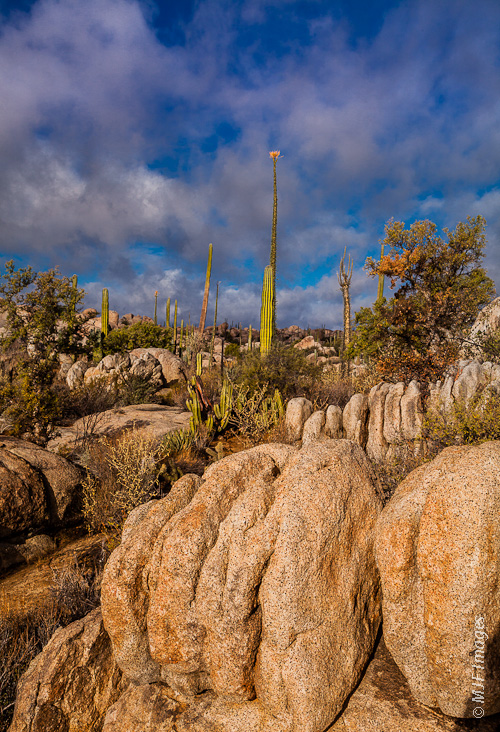 Granite and towering cirios characterize the beautiful northern Baja Peninsula desert.