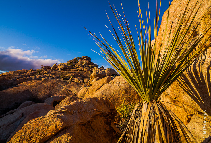 Aloe and granite outcrops in the desert of the northern Baja Peninsula glow with golden light at sunset.