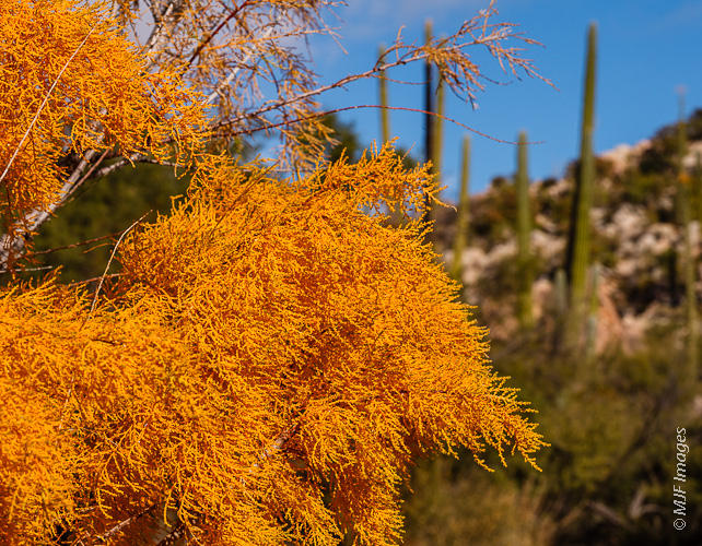 The northern Baja Peninsula in Mexico shows off some color after rains.