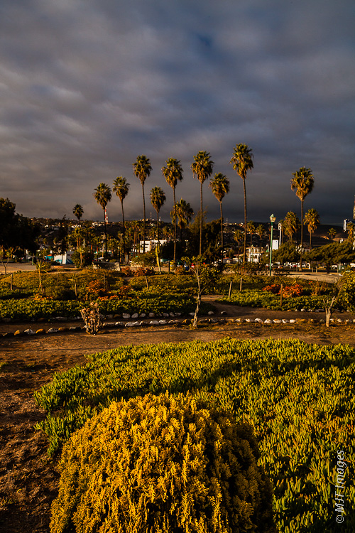 There is green space along Ensenada's waterfront.