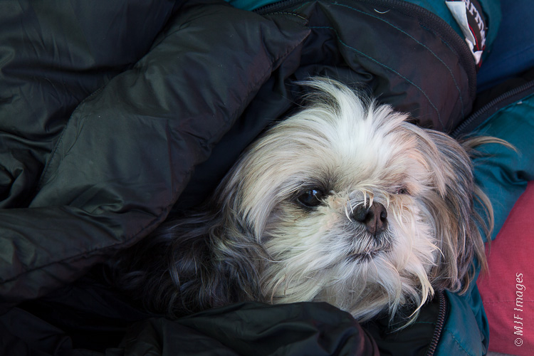 Charl usually takes over my sleeping bag when I go out for those cold dawn photo shoots.