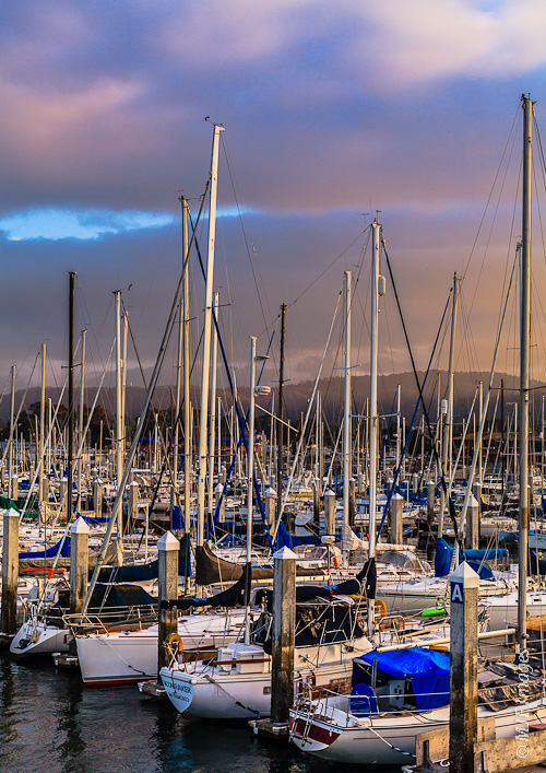 The harbor at Monterey, California is dominated these days by pleasure craft.