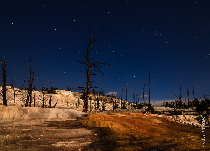 The white mineral terraces at Mammoth in Yellowstone National Park glow under a partial moon and the summer stars.
