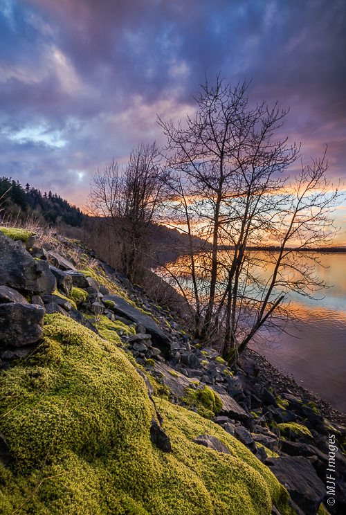 The lower Columbia River in Oregon flows west toward the Pacific past the moss-covered rocks lining its banks.