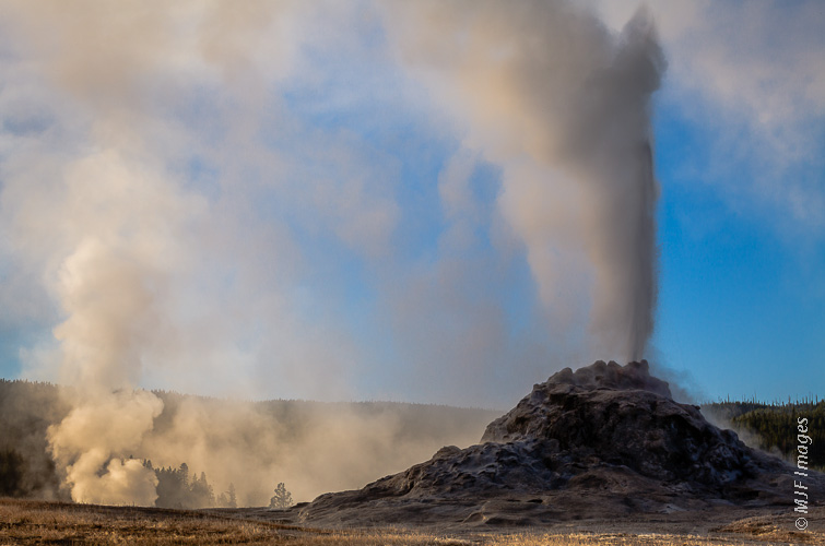 White Dome geyser in Yellowstone National Park erupts into a beautiful morning.