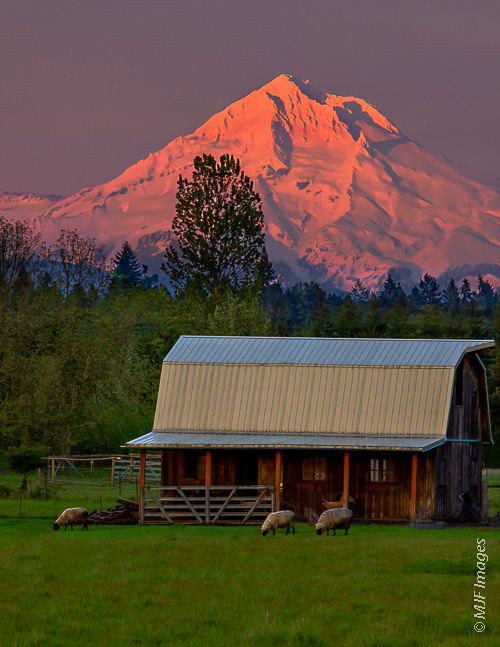 Mountains feed rich farmland in river valleys the world over, including here at Mt Hood.