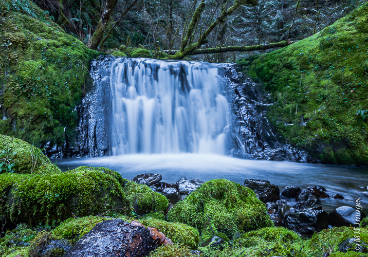 A small tributary of Eagle Creek in Oregon's Columbia River Gorge drops over a small falls in a mossy glen.