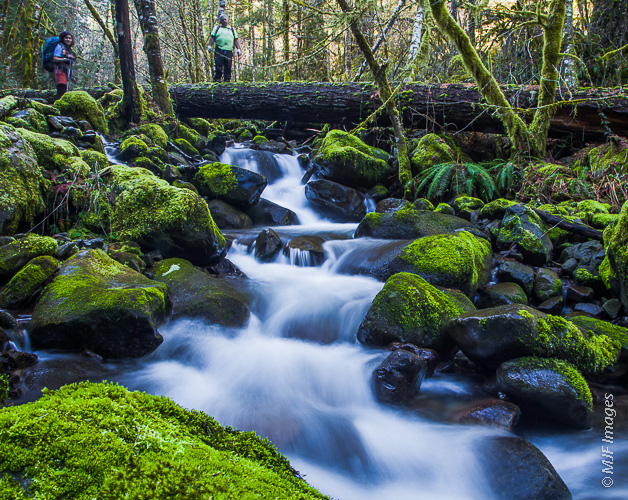 On an off-trail hike in Oregon's Columbia River Gorge, we use a slippery log bridge to cross a rushing creek.