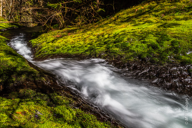 A small creek in Oregon's Columbia River Gorge rolls through a mossy forest.