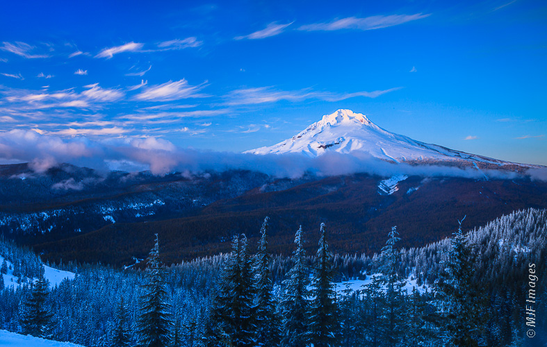 Mount Hood stands alone, surrounded by forest, during the beginning of dusk.