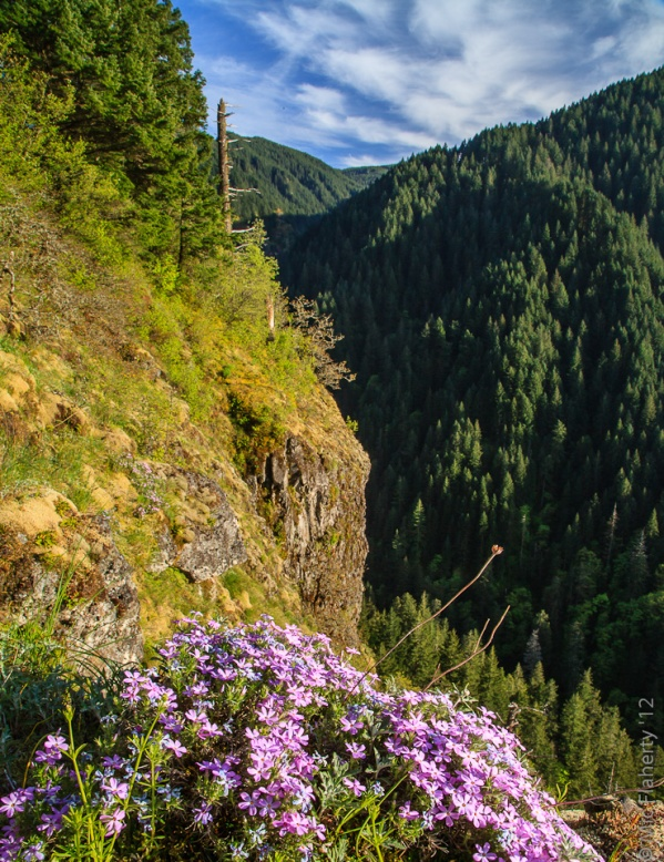 In the Columbia River Gorge, hiking high up on the ridges brings you to flowery meadows, most of which are too steep to admire the flowers close-up.