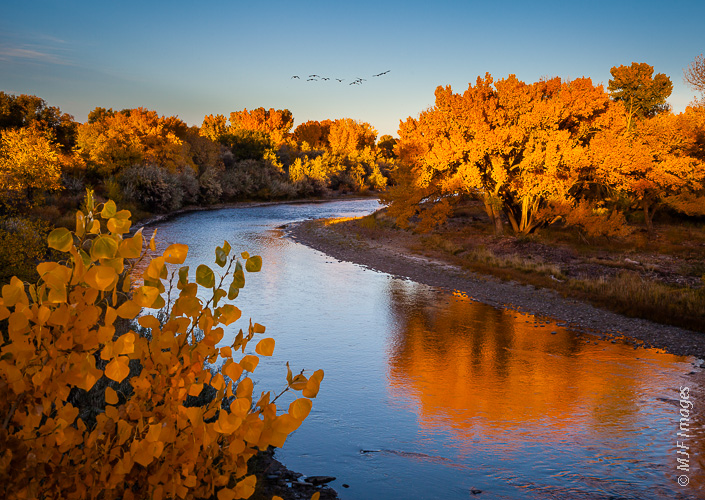 Birds fly south over fall colors along the Animas River in New Mexico.