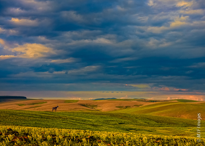 Big sky and rolling green plains grazed by roan antelope define the pristine Nyika Plateau of northern Malawi.