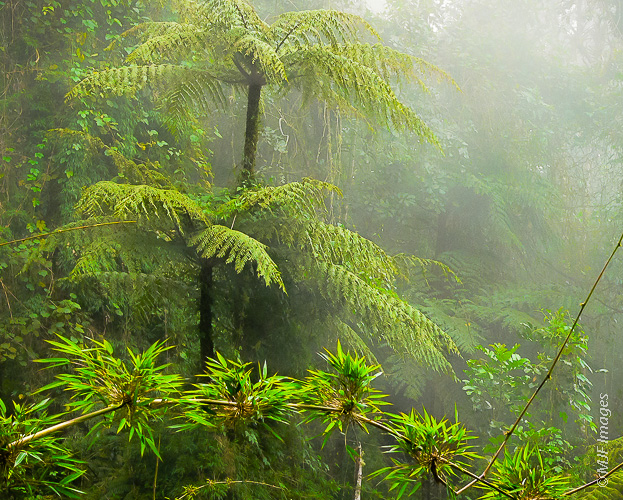 In the foothills of the Andes in Colombia, a cloud forest seems a great place to hide leprechauns.
