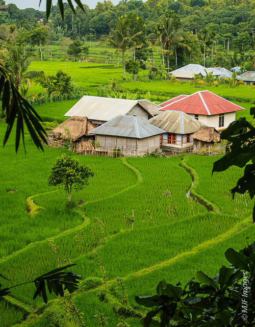 Rice paddies surround a small village on the island of Lombok, Indonesia.