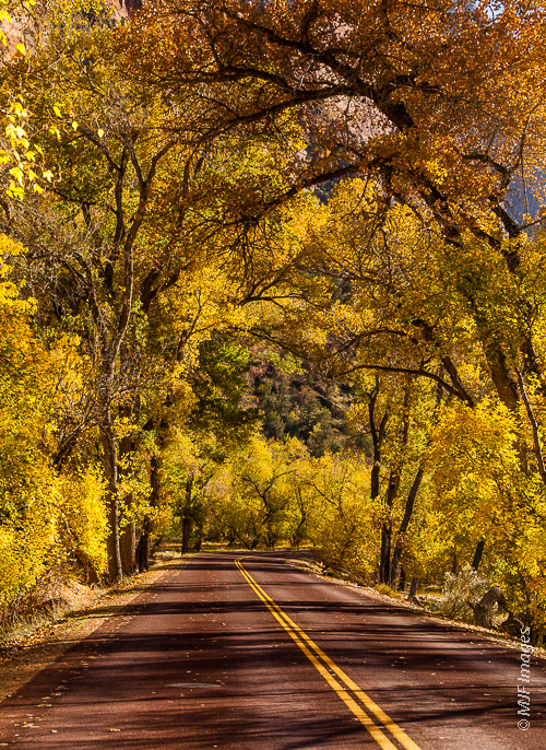 The road in Zion Canyon, Utah is lined with cottonwood trees.