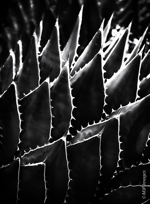 I love to capture nature in what I call semi-abstracted form.  That is, you can still recognize what you are looking at.  This is an agave plant in Baja California, Mexico.