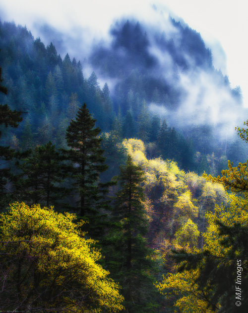 The steep forest of the Columbia River Gorge in Oregon sees plenty of misty-rainy days.