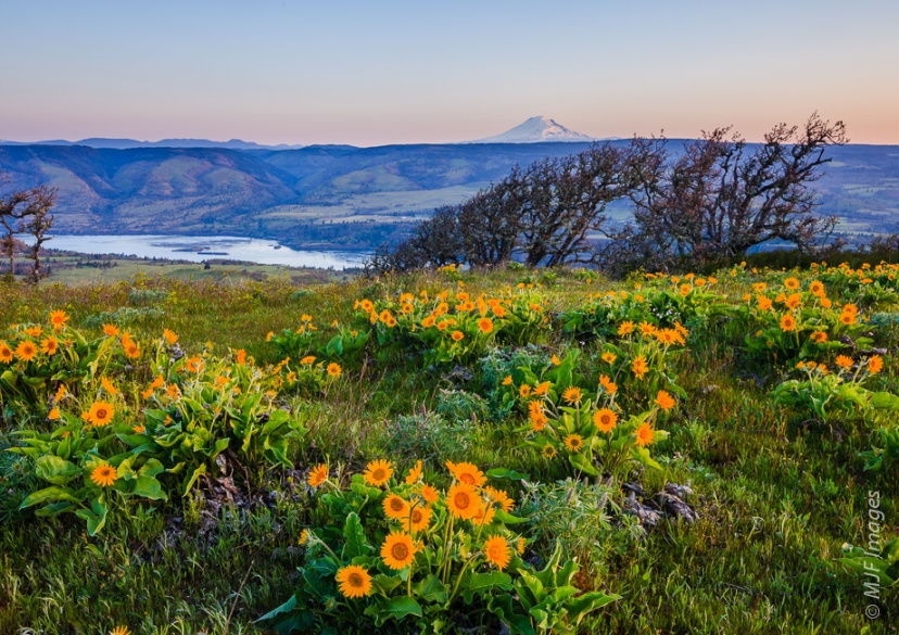 Mount Adams is visible on the hike up to Tom McCall Point at Rowena Plateau in Oregon.