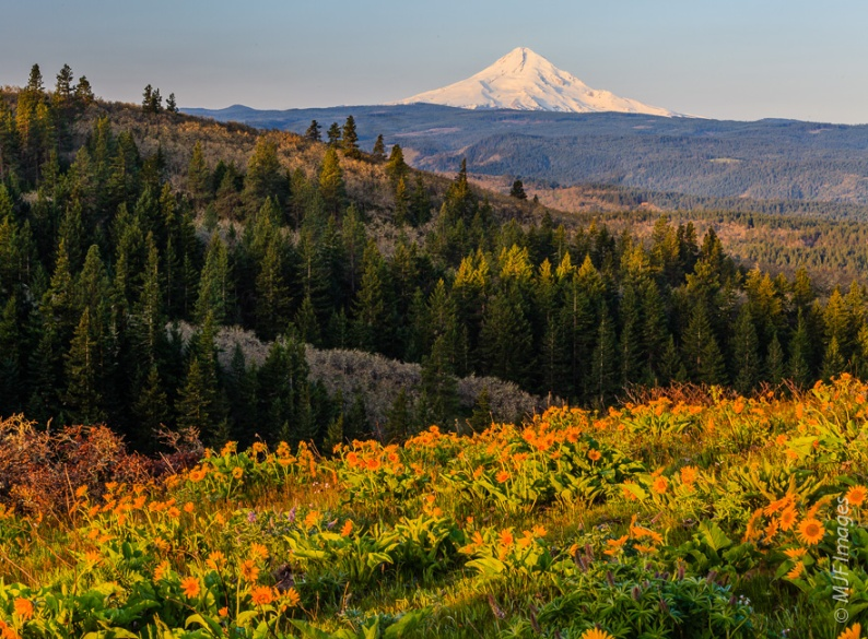 Mount Hood stands beyond the spring blooms on Tom McCall Point in Oregon.