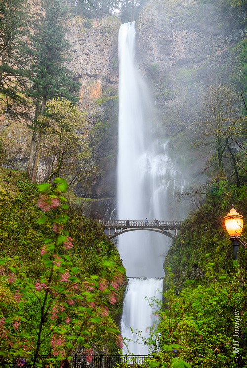 Multnomah Falls is Oregon's highest waterfall and one of its most popular tourist attractions.  Here it is in full flood.  The bridge crosses just above the lower cascade and a trail continues to the top of the tall upper cascade.