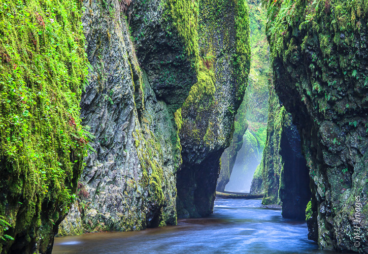 Oneonta Gorge is a lush slot canyon in Oregon's Columbia River Gorge Scenic Area.