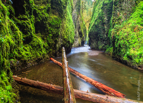 Logs are swept down Oneonta Gorge in Oregon during heavy winter rains.