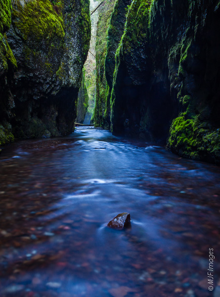 The Oneonta Gorge in Oregon narrows to a point where not much light makes it down to the creek bottom.