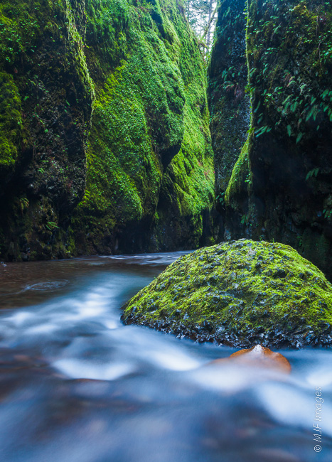 The narrows of Oneonta Gorge in Oregon were created over uncounted years by the creek's frequent flooding.