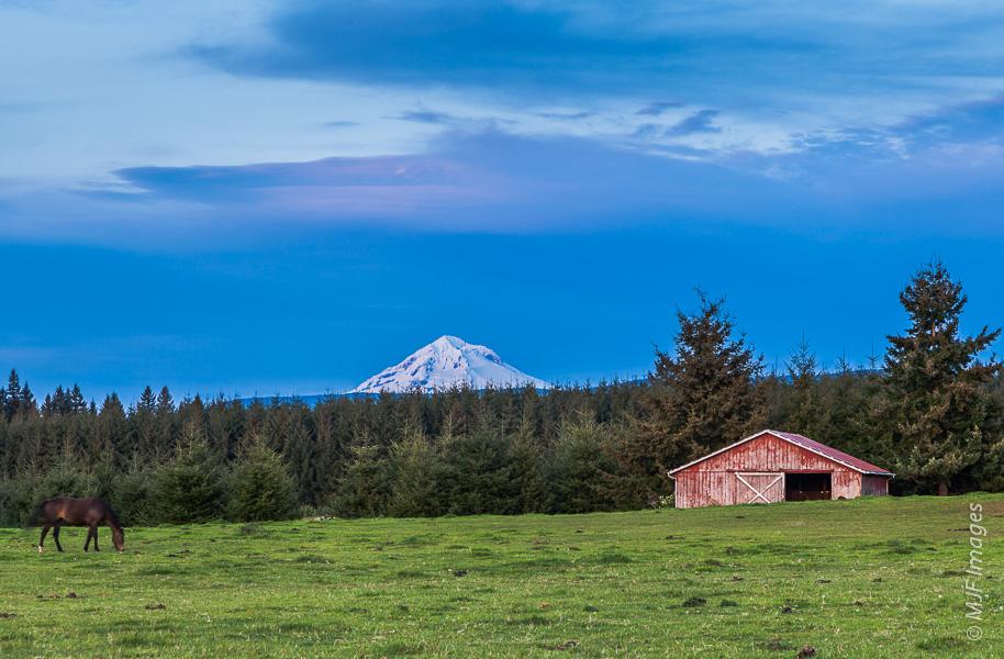 Mount Hood rises beyond rural pastureland in western Oregon.
