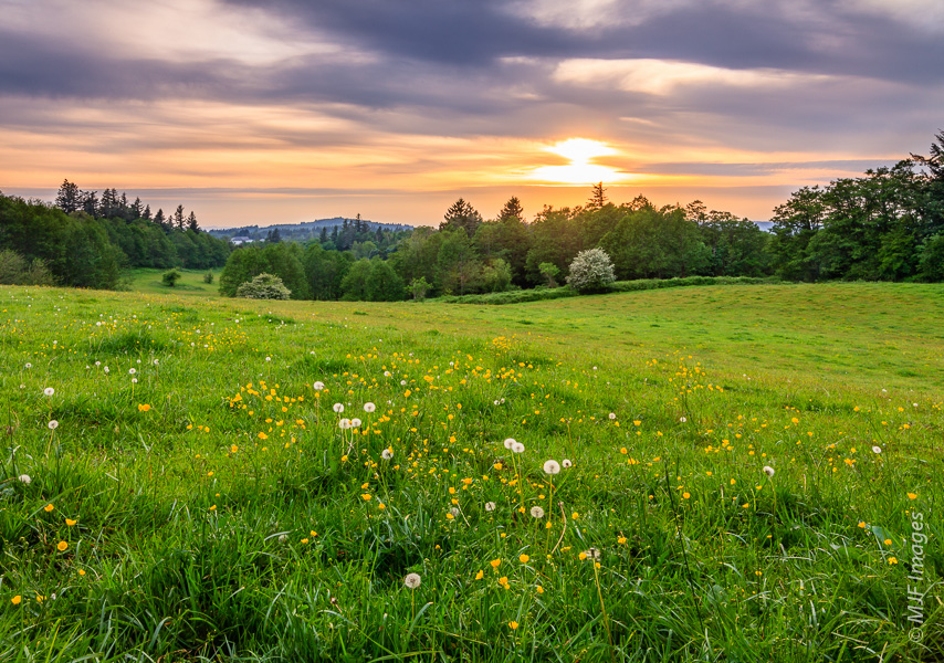 The area around Corbett, Oregon grows and glows under a spring sunset.