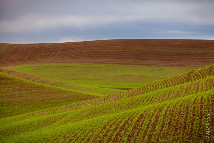 Newly planted rows of wheat grace the smooth terrain of the Palouse in Washington state.