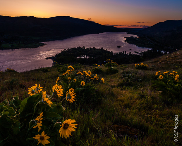 Springtime means that the sunflower-like balsamroot blooms at Rowena Plateau above the Columbia River in Oregon.
