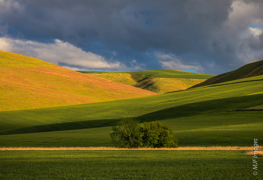 The Palouse, a region of rolling, rich agricultural land in southeastern Washington is a very green and peaceful place in springtime.