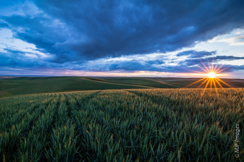 The sun goes down over the wheat fields of the Palouse in eastern Washington.