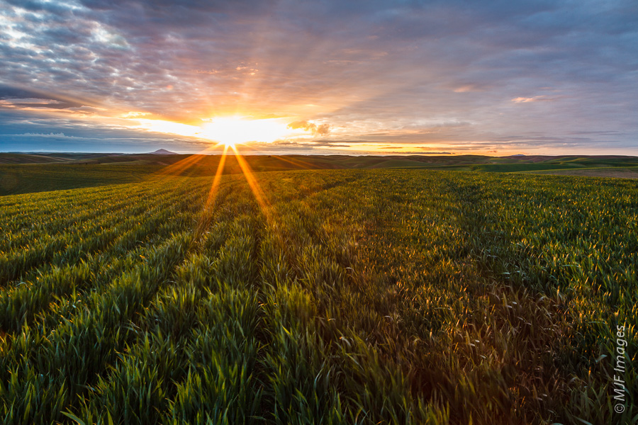Wheat is the name of the game in the Palouse of Washington state.