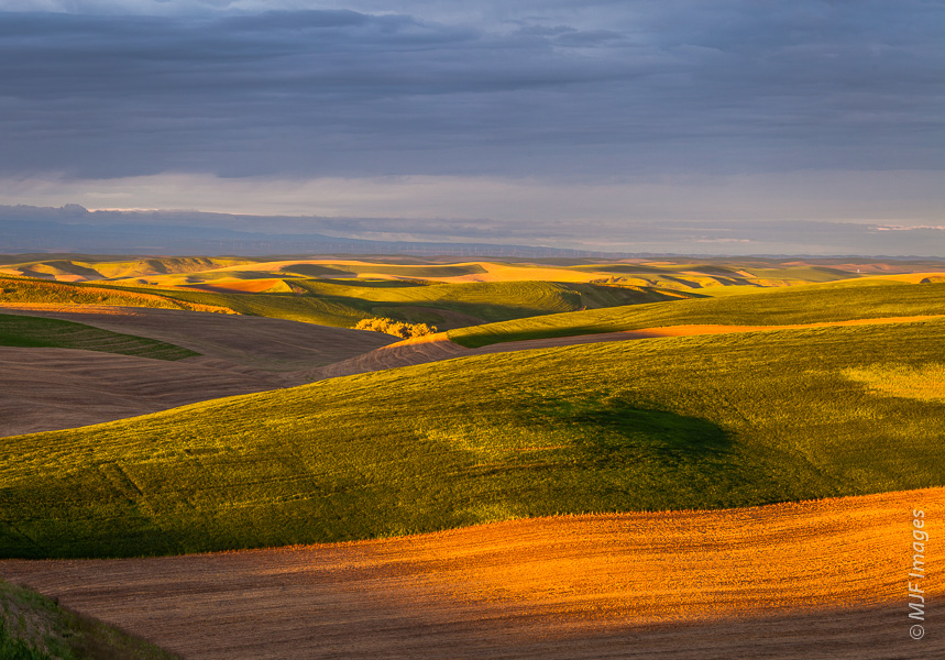 The sun's first rays sweep across the rolling wheat fields of the Palouse in southeastern Washington state.