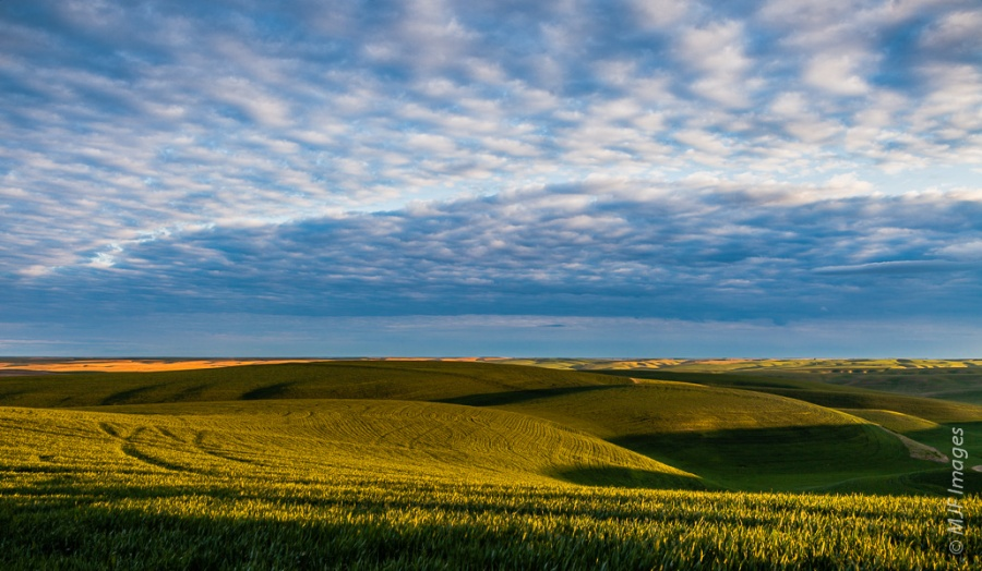 The empty Palouse of eastern Washington at sunrise is all wheatfields and sky.