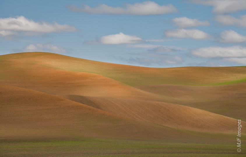 Some of the terrain in the Palouse of eastern Washington is left golden-bare even in late spring when most everything is vibrant green.