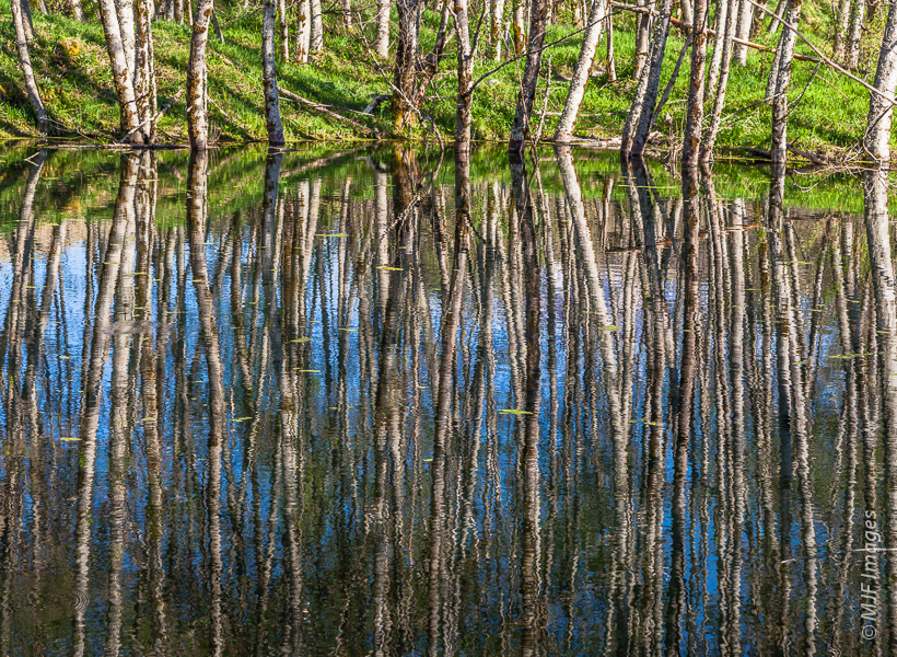 Trees are reflected in one of the many ponds at Mount St. Helens' Hummocks area in Washington.