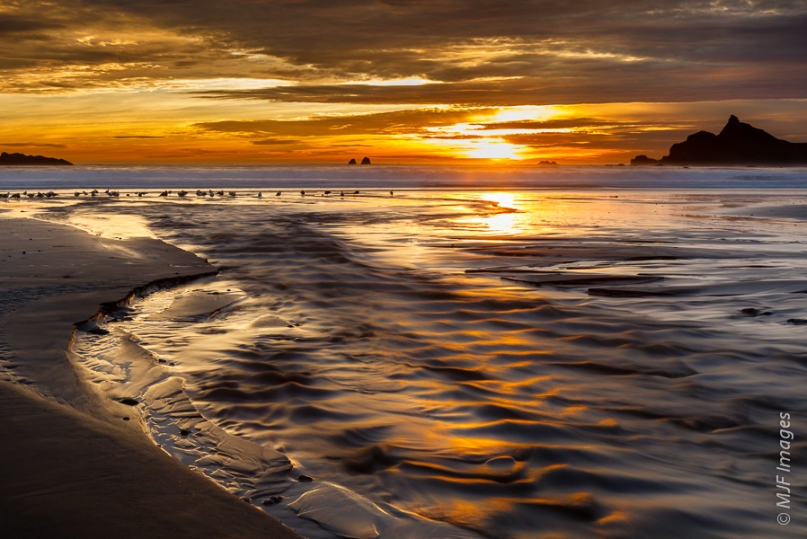 The sun goes down as wading birds forage for tiny crustaceans along the northern California coast where a creek enters the ocean.