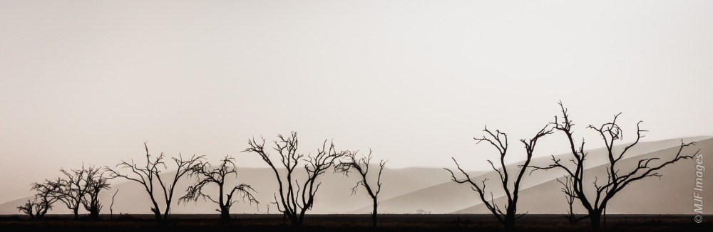 Their shapes and fact that these camel thorn trees in Namibia are in silhouette helps to isolate them from the background of dunes.  The strong morning light washes out the background, further de-emphasizing it.