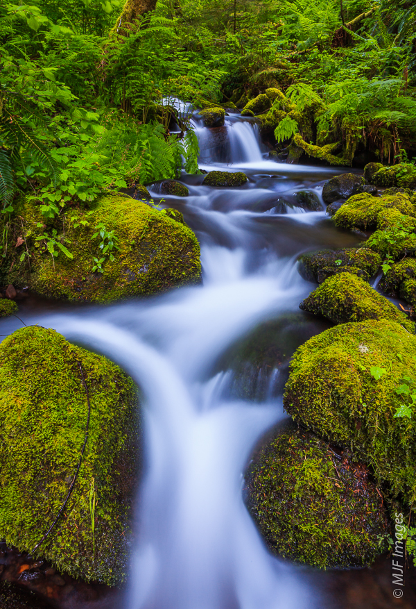 A small stream deep in Oregon's Columbia River Gorge flows through a green-lined channel.