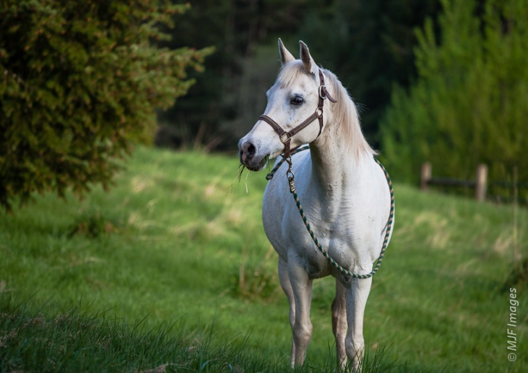 For this picture of my mare I simply opened up my aperture all the way (f/4) and shot.  I checked my LCD and saw that the background was a little too much in focus, so I moved closer and shot again.  I wanted it to be only slightly out of focus.