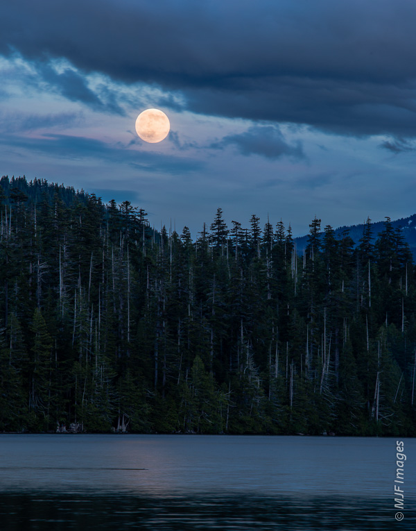 The so-called supermoon, actually the full moon at perigee, rises over Lost Lake, Oregon as a beaver swims by.
