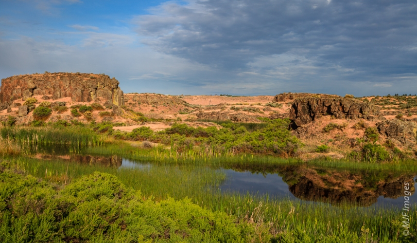 In springtime, Drumheller Channels in eastern Washington is a paradise for wildlife because of the numerous wetlands formed in a normally dry area.